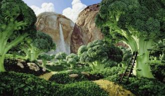 humus de lombriz y el bosque