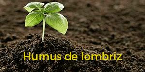 Humus de Lombriz